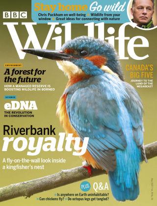 BBC Wildlife May2020