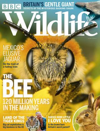 BBC Wildlife July2020