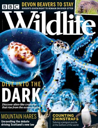 BBC Wildlife September2020