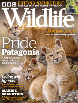 BBC Wildlife October2020