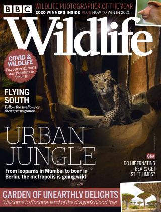 BBC Wildlife November2020