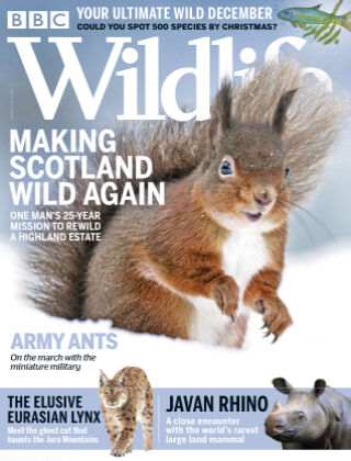 BBC Wildlife December2020