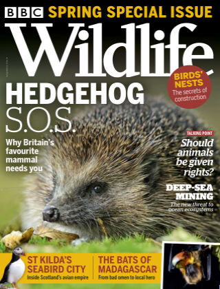 BBC Wildlife Spring2021