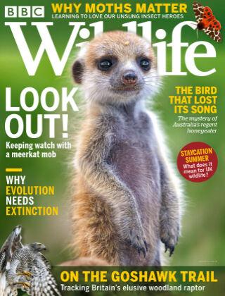 BBC Wildlife July2021