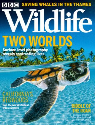 BBC Wildlife October2021