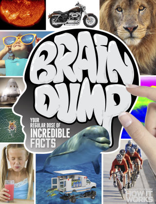 Brain Dump Issue 035