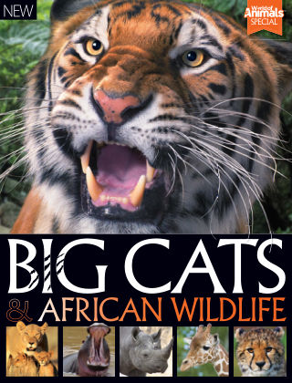 World Of Animals Book Of Big Cats & African Wildlife 2nd Edition