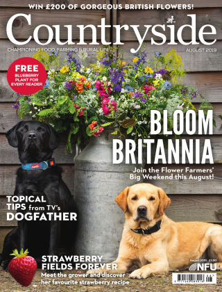 Countryside August 2019