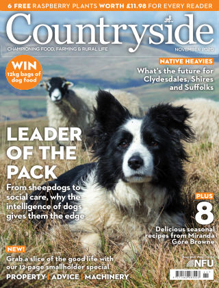 Countryside November 2020