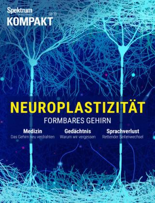 Spektrum Kompakt Neuroplastizität