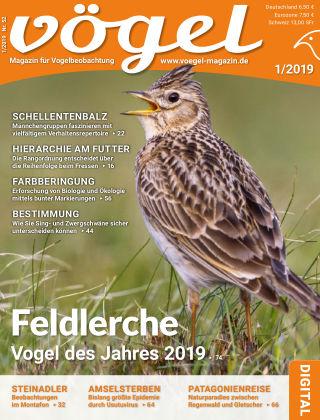 VÖGEL - Magazin für Vogelbeobachtung 1/2019
