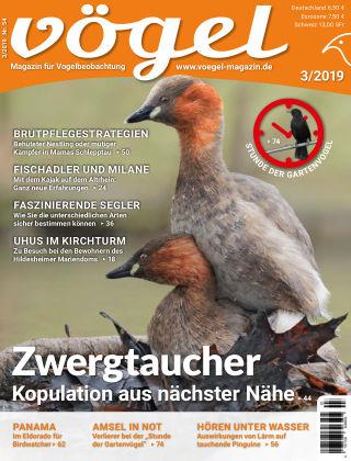 VÖGEL - Magazin für Vogelbeobachtung 03/19