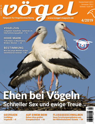 VÖGEL - Magazin für Vogelbeobachtung 04/2019