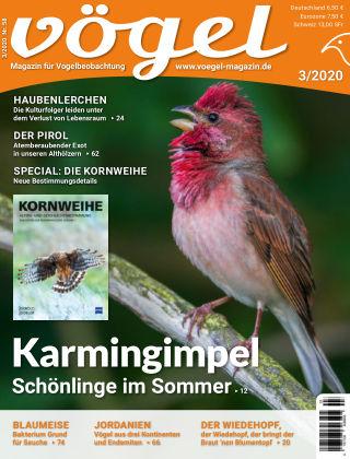 VÖGEL - Magazin für Vogelbeobachtung 03/2020