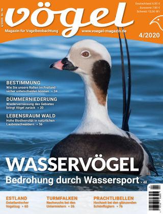 VÖGEL - Magazin für Vogelbeobachtung 4/2020