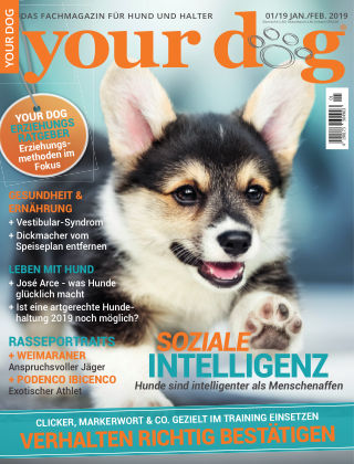 Your Dog 01/2019