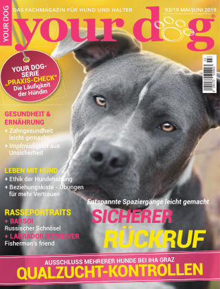 Your Dog 03/2019
