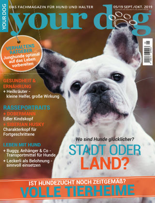 Your Dog 5/2019