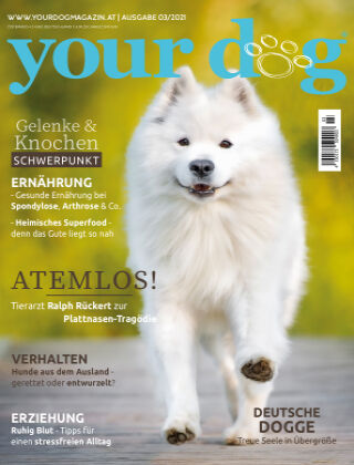 Your Dog 03/2021