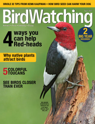 BirdWatching Mar-Apr 2017
