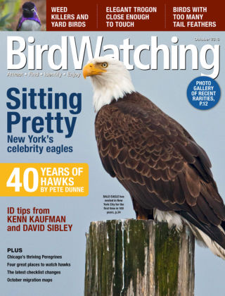 BirdWatching Sept-Oct 2016