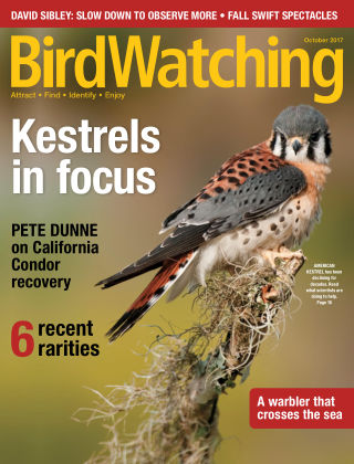 BirdWatching Sep-Oct 2017