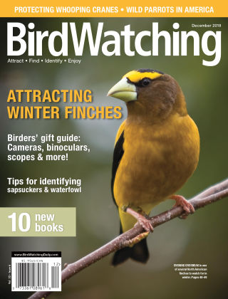 BirdWatching Nov-Dec 2018