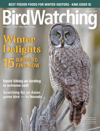 BirdWatching Jan-Feb 2019