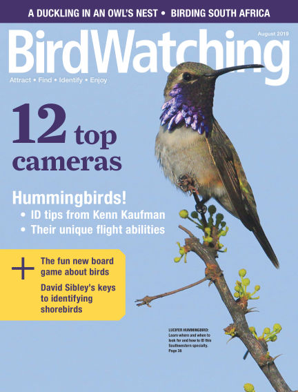 BirdWatching June 08, 2019 00:00