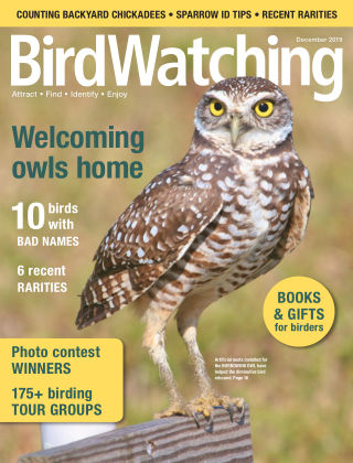 BirdWatching Nov-Dec 2019