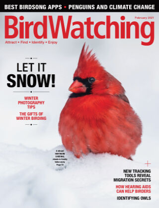 BirdWatching Jan Feb 2021