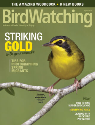 BirdWatching March April 2021