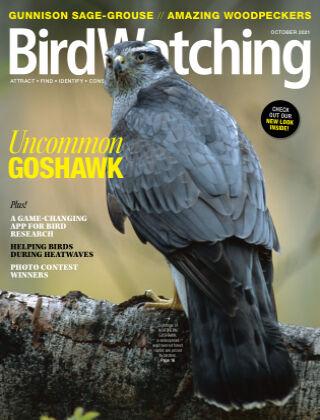 BirdWatching October 2021