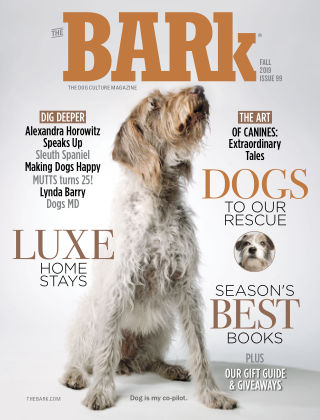 The Bark Fall 2019