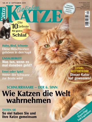 Geliebte Katze 09_2019