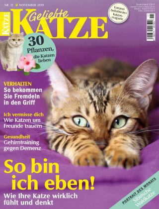 Geliebte Katze 11_2019