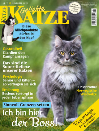 Geliebte Katze 11_2020