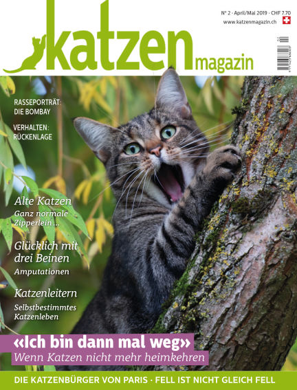 Katzen Magazin