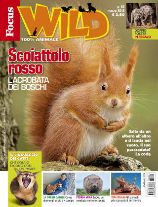 Focus Wild 2018-02-13