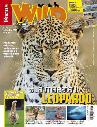 Focus Wild 2018-08-11