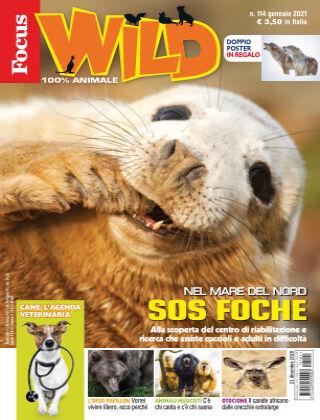 Focus Wild 2020-12-22