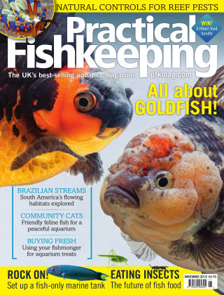 Practical Fishkeeping November 2019