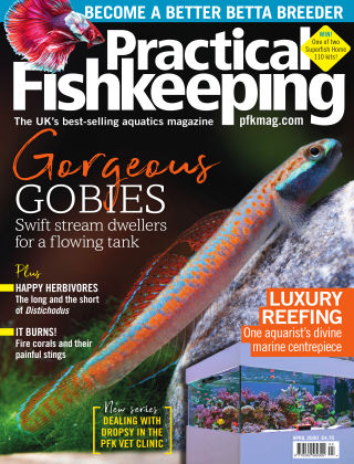 Practical Fishkeeping April 2020