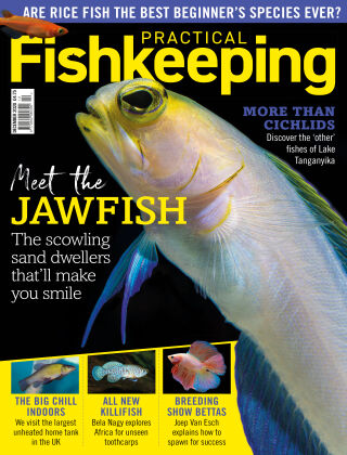 Practical Fishkeeping December 2020