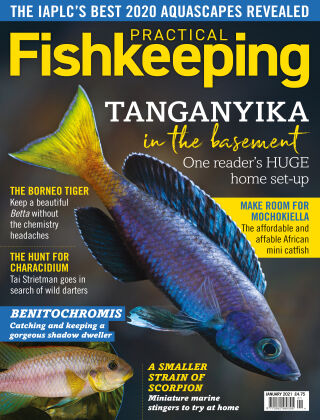 Practical Fishkeeping January 2021