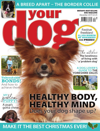 Your Dog Magazine December 2019
