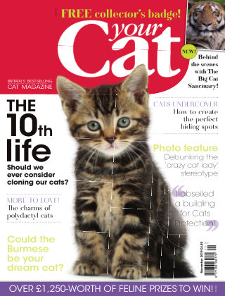 Your Cat Magazine November 2019