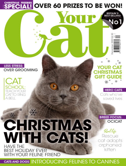 Your Cat Magazine November 13, 2020 00:00