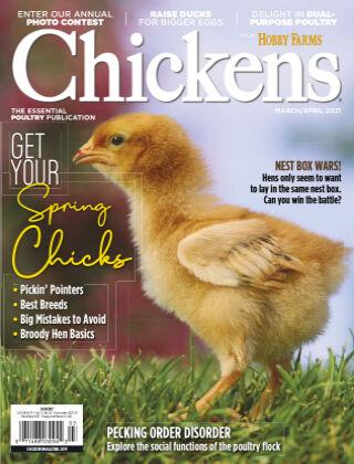 Chicken Mar-Apr 2021