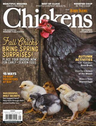 Chicken Sept/Oct
